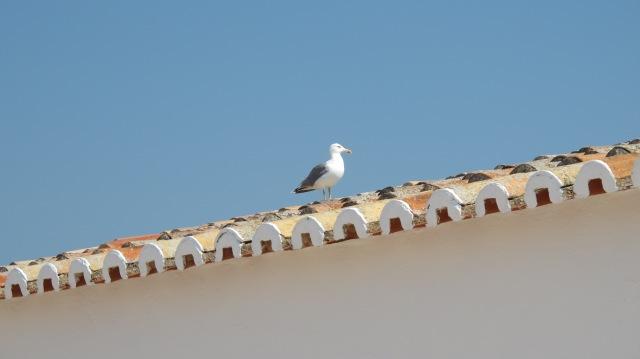 Gaviota en tejado