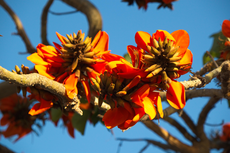 Flores arbol Calpe.00001 Dupdo